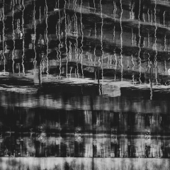 barking_reflections007